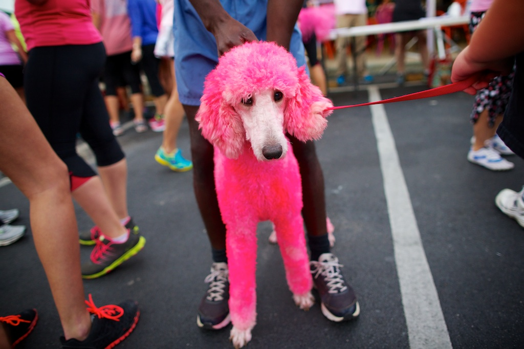 Pink dog